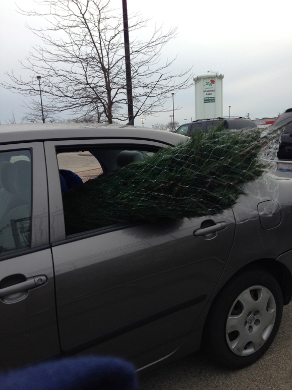 backseat tree