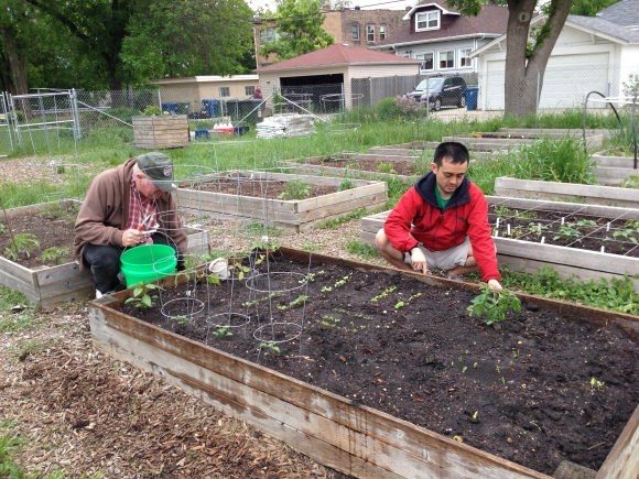 community garden, community gardening