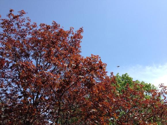 blue skies in spring