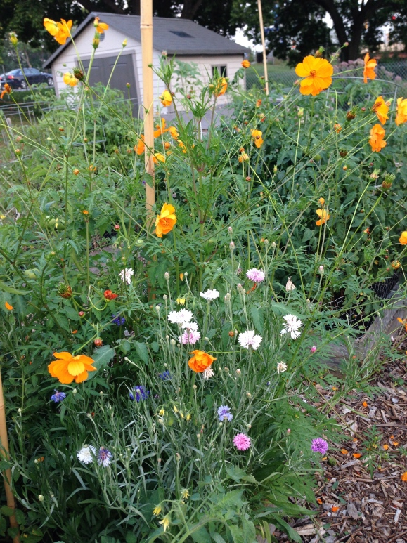 plot 6, flower garden