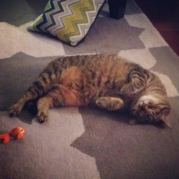 Presley napping