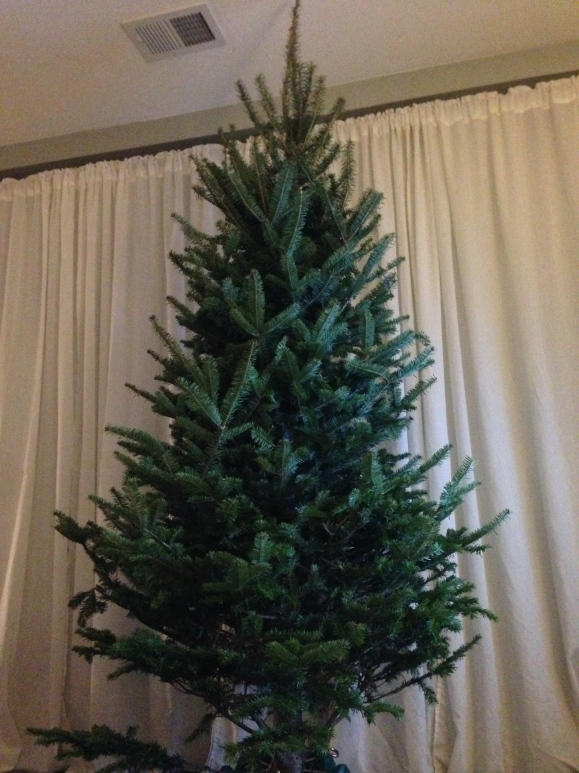 the tree 2014
