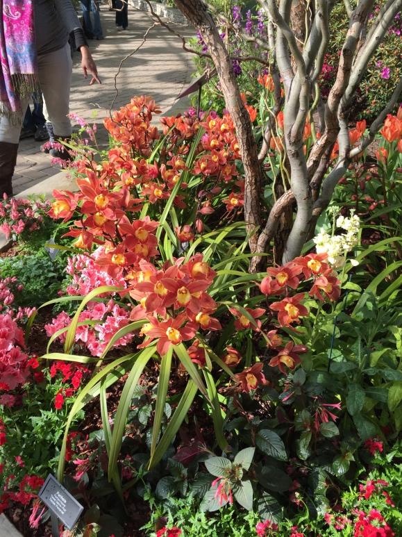 Garfield Park Conservatory Spring Flower Show