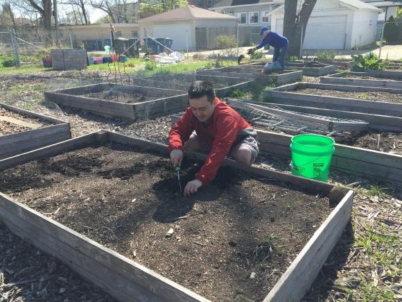 plot #6, forest park community garden,weeding