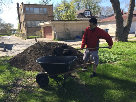 plot #6, forest park community garden, mulching
