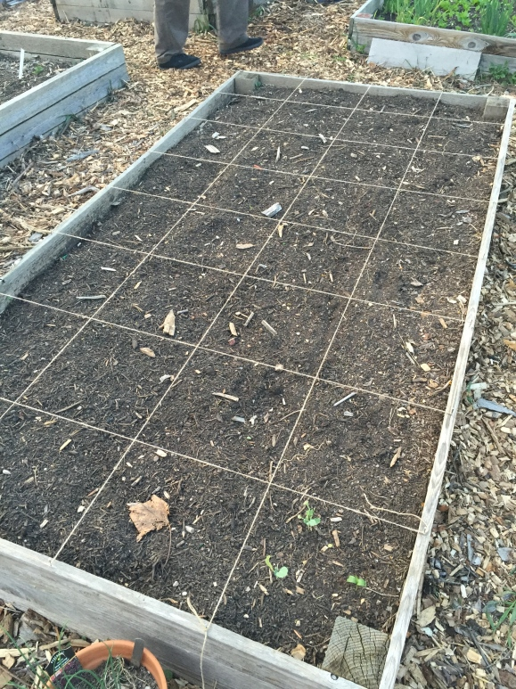 prepping for square foot gardening