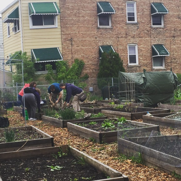 community gardening, clearing plots, Forest Park Community Garden