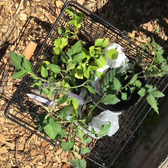 basket of plants for the garden, plot #6