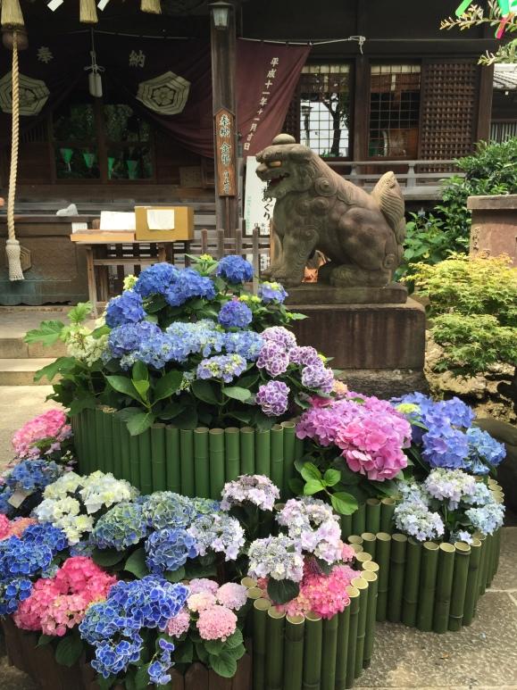 Bunkyo Hydrangea Festival, Hakusan Jinja Shrine