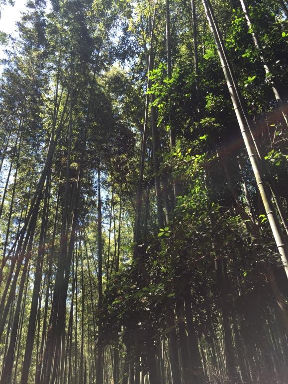 Arashima Bamboo Grove, Kyoto, Japan
