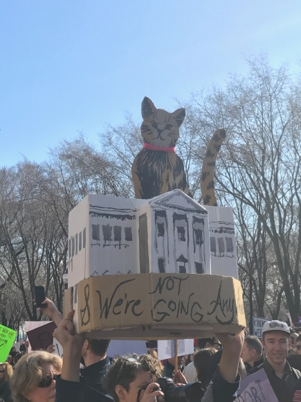 Women's March Chicago, White House Cat