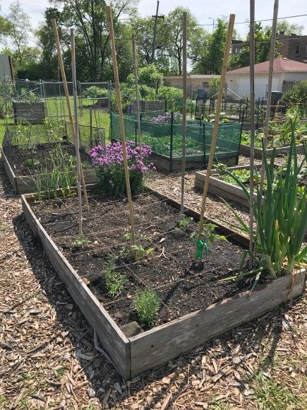 forest park community garden, plot 6, community gardening, forest park