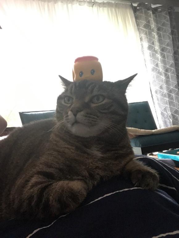 presley with Fueki nori on her head, things on my cat