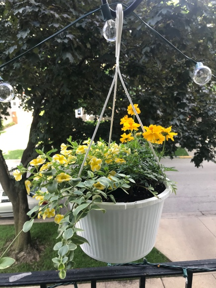 yellow petunias, yellow marigolds