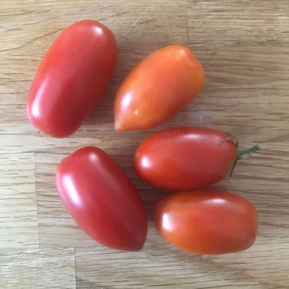 tiny tomato harvest, plot 6, forest park community garden, juliet tomatoes