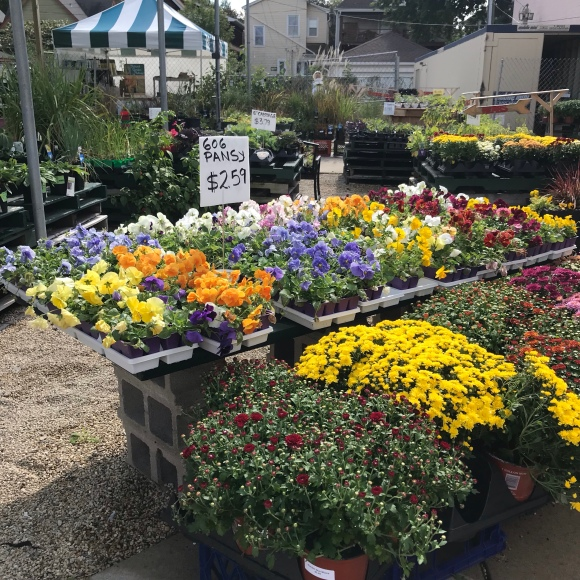 empowering gardens, fall pansies, fall flowers, garden center, mums
