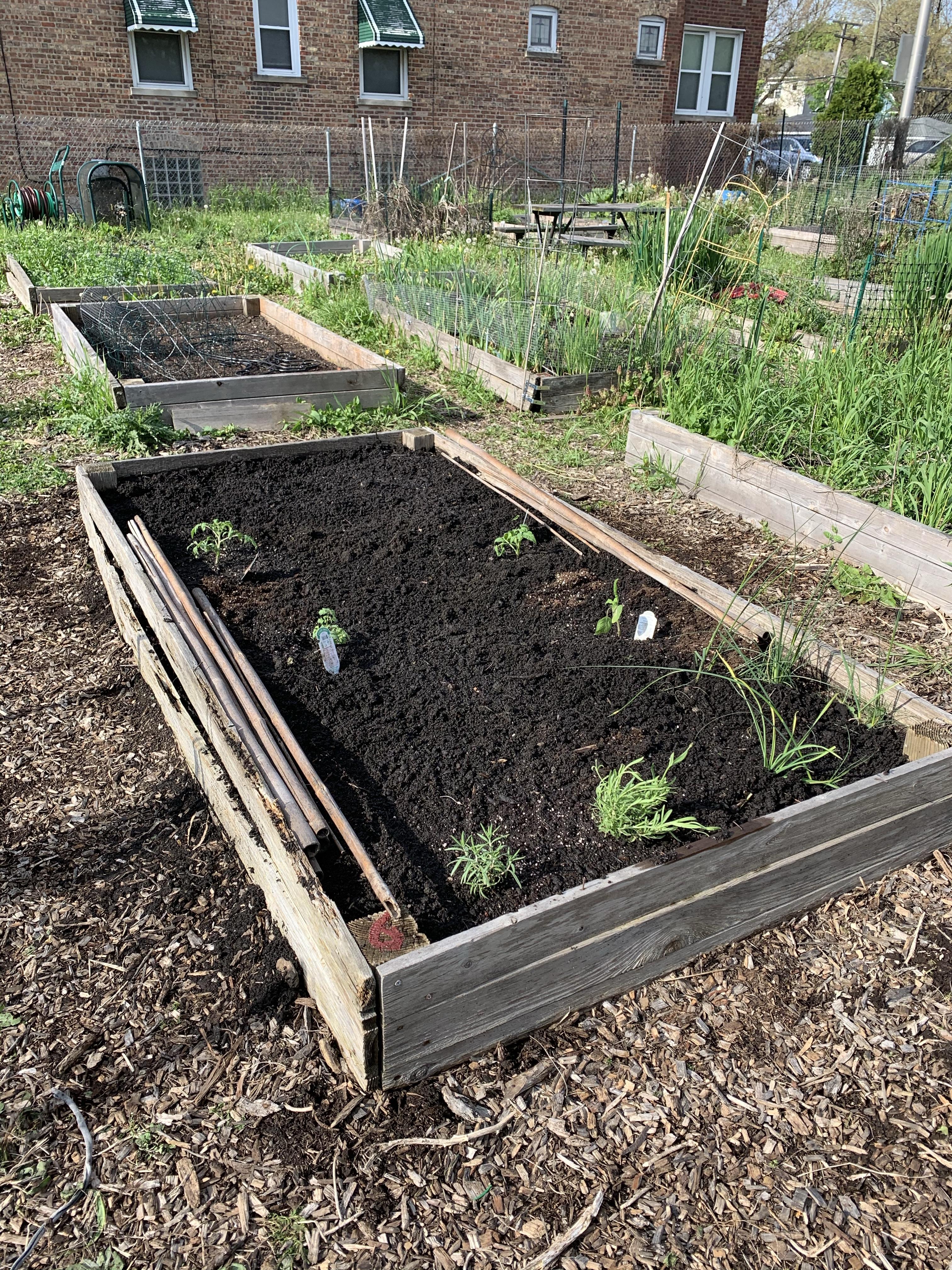 plot 6, forest park community garden, forest park, community garden